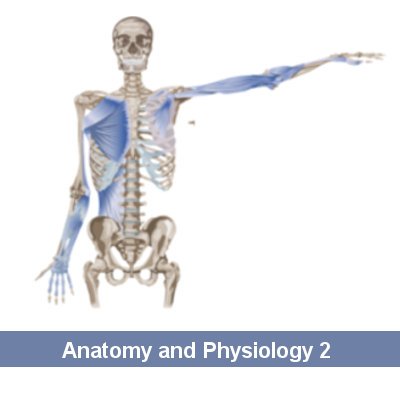 Anatomy and Physiology II – Global Student Consulting
